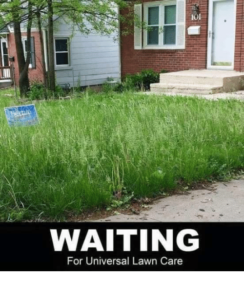 waiting for universal lawn care 19659705 waiting for universal lawn care meme on me me,Lawn Memes