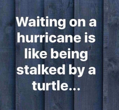Image result for stalked by a turtle meme