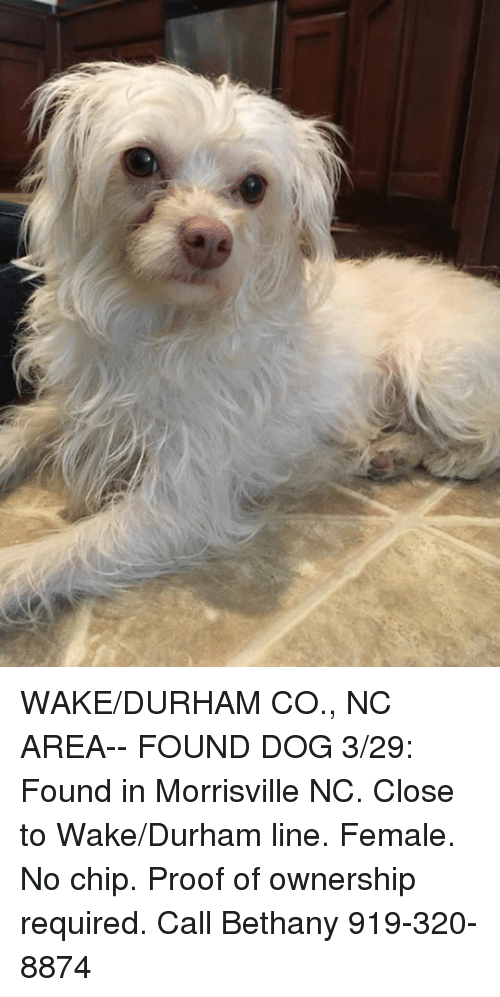 https://me me/i/willow-springs-nc-wake-johnston-co-lost-dog