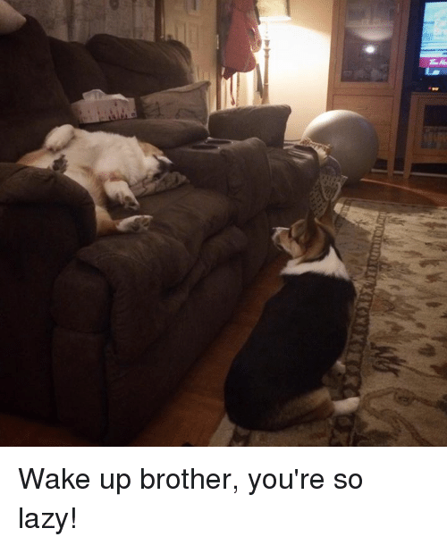 Wake Up Brother You're So Lazy! | Lazy Meme on ME ME