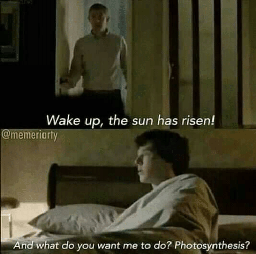 Photosynthesis, Sun, and The Sun: Wake up, the sun has risen!  @memeriarty  And what do you want me to do? Photosynthesis?