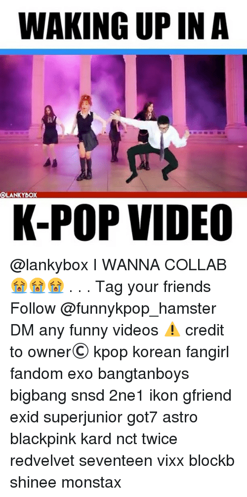 Friends, Funny, and Memes: WAKING UP IN A  OLANKYBOX  K-POP VIDEO @lankybox I WANNA COLLAB 😭😭😭 . . . 》Tag your friends 》》 Follow @funnykpop_hamster 》》》DM any funny videos ⚠ credit to owner© kpop korean fangirl fandom exo bangtanboys bigbang snsd 2ne1 ikon gfriend exid superjunior got7 astro blackpink kard nct twice redvelvet seventeen vixx blockb shinee monstax