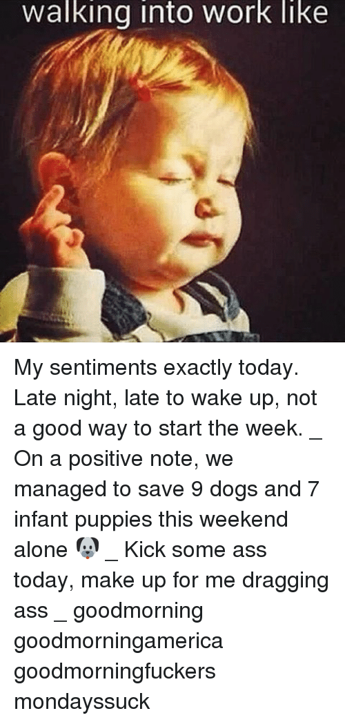 Being Alone, Dogs, and Memes: Walking into Work like My sentiments exactly today. Late night, late to wake up, not a good way to start the week. _ On a positive note, we managed to save 9 dogs and 7 infant puppies this weekend alone 🐶 _ Kick some ass today, make up for me dragging ass _ goodmorning goodmorningamerica goodmorningfuckers mondayssuck