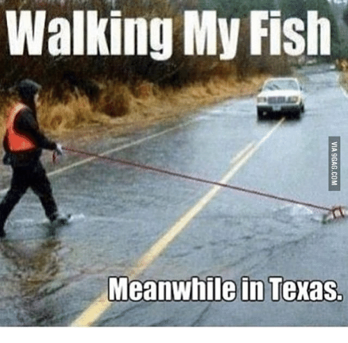 walking my fish meanwhile in texas 16084034 walking my fish meanwhile in texas my fish meme on me me