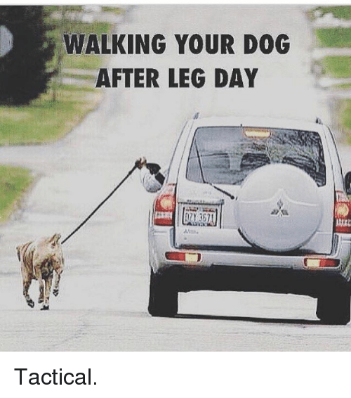 leg day meme dog - photo #38
