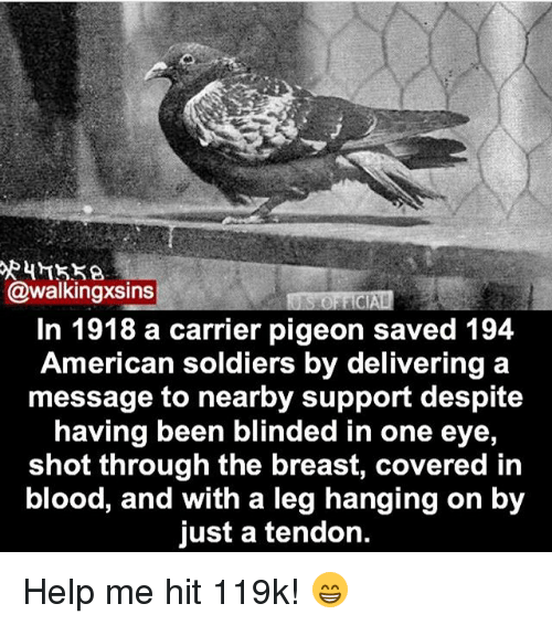 Memes, Soldiers, and American: @walkingxsins  In 1918 a carrier pigeon saved 194  American soldiers by delivering a  message to nearby support despite  having been blinded in one eye  shot through the breast, covered in  blood, and with a leg hanging on by  just a tendon. Help me hit 119k! 😁