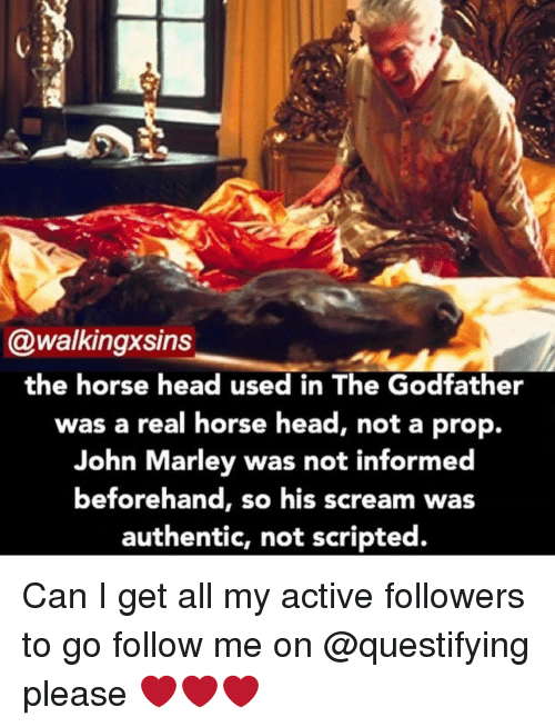 Horses, Memes, and The Godfather: @walkingxsins  the horse head used in The Godfather  was a real horse head, not a prop.  John Marley was not informed  beforehand, s  his scream was  authentic, not scripted. Can I get all my active followers to go follow me on @questifying please ❤️❤️❤️