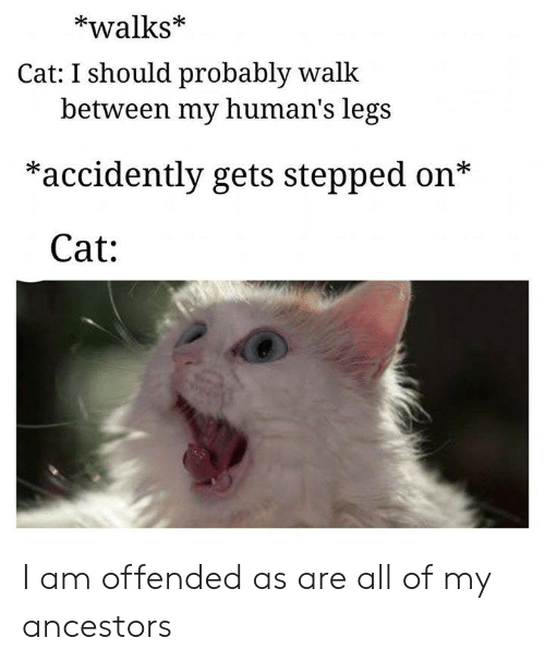Memes, 🤖, and Cat: *walks*  Cat: I should probably walk  between my human's legs  *accidently gets stepped on*  Cat: I am offended as are all of my ancestors
