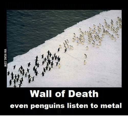 wall-of-death-even-penguins-listen-to-me