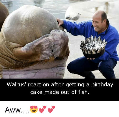 Walrus After Getting Fish Cake