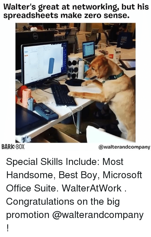 Memes, Microsoft, and Microsoft Office: Walter's great at networking, but his  spreadsheets make zero sense.  BARK BOX  walterandcompany Special Skills Include: Most Handsome, Best Boy, Microsoft Office Suite. WalterAtWork . Congratulations on the big promotion @walterandcompany !