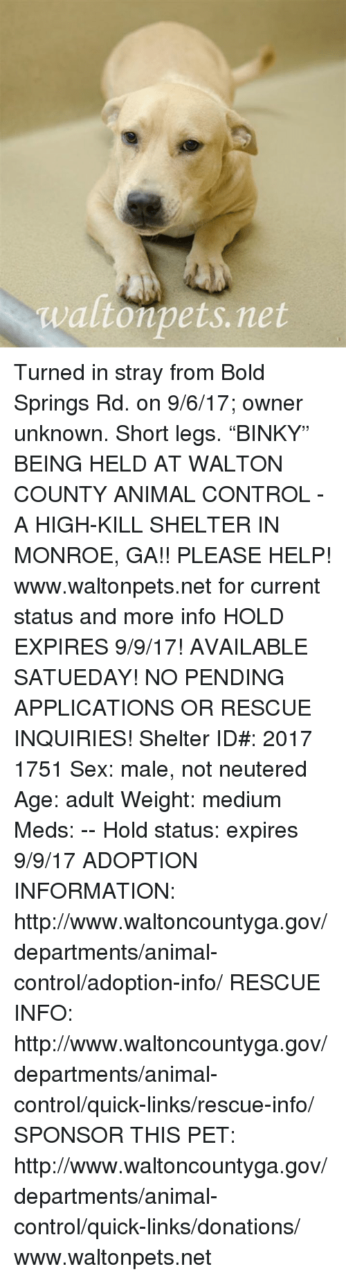 Waltonpetsnet Turned in Stray From Bold Springs Rd on 9617 Owner