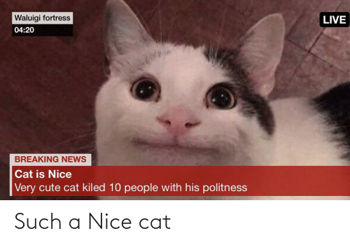Cute, News, and Breaking News: Waluigi fortress  LIVE  04:20  BREAKING NEWS  Cat is Nice  Very cute cat kiled 10 people with his politness Such a Nice cat