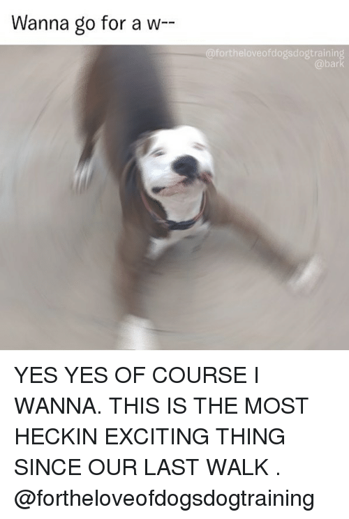 Memes, 🤖, and Yes: Wanna go for a w-  @fortheloveofdogsdogtrainin  @bar YES YES OF COURSE I WANNA. THIS IS THE MOST HECKIN EXCITING THING SINCE OUR LAST WALK . @fortheloveofdogsdogtraining