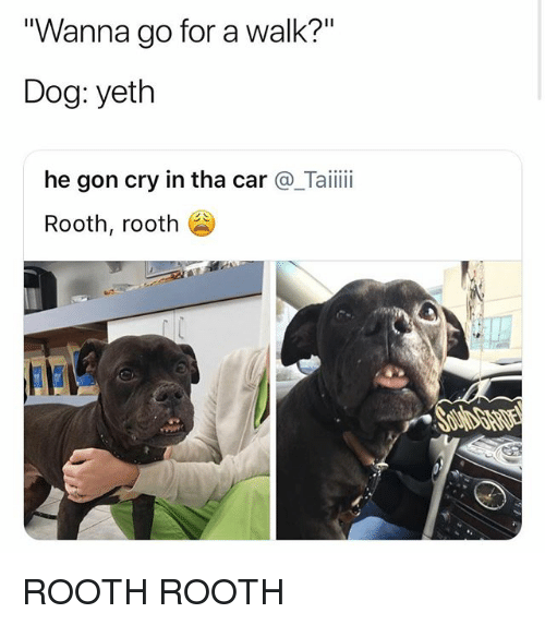 """Dog, Car, and Cry: """"Wanna go for a walk?""""  Dog: yeth  he gon cry in tha car@_Taiii  Rooth, rooth ROOTH ROOTH"""