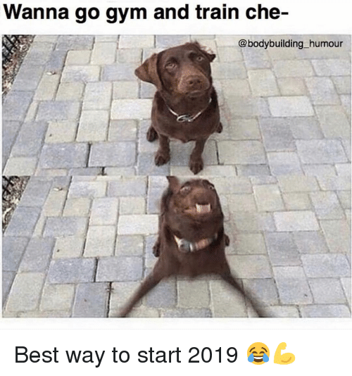 Gym, Best, and Bodybuilding: Wanna go gym and train che-  @bodybuilding humour Best way to start 2019 😂💪