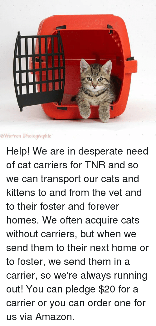 Warren Photographic Help We Are In Desperate Need Of Cat Carriers