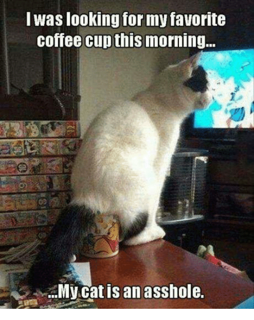 Grumpy Cat, Coffee, and Cat: Was looking for my favorite  Coffee Cup this  morning...  My cat is an asshole.
