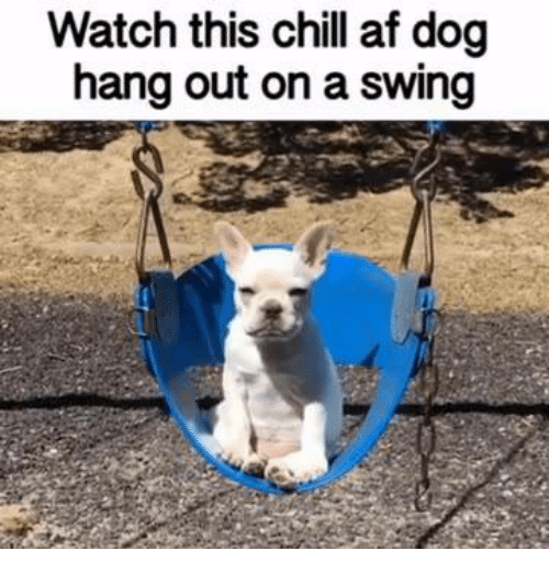 Af, Chill, and Memes: Watch this chill af dog  hang out on a swing