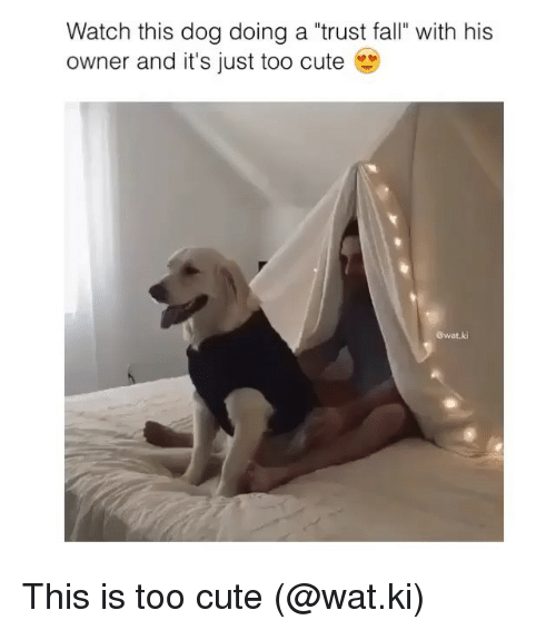 "Cute, Fall, and Funny: Watch this dog doing a ""trust fall with his  owner and it's just too cute  @wat.ki This is too cute (@wat.ki)"