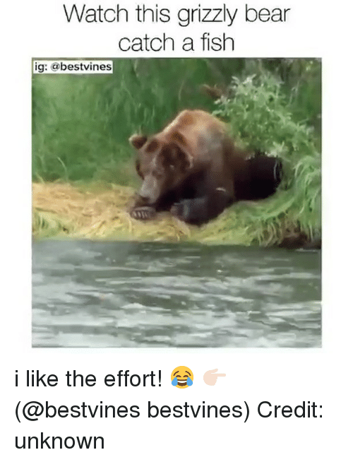 watch this grizzly bear catch a fish ig bestvines i 28470477 ✅ 25 best memes about grizzly bear grizzly bear memes