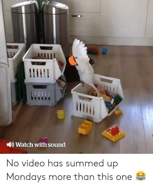 Mondays, Video, and Watch: Watch with sound No video has summed up Mondays more than this one 😂