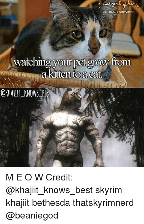 Memes, Skyrim, and 🤖: watching your pet grow from  akittento a Catt M E O W Credit: @khajiit_knows_best skyrim khajiit bethesda thatskyrimnerd @beaniegod