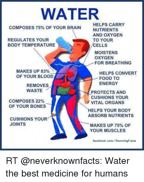Image result for Water helps regulate body temperature