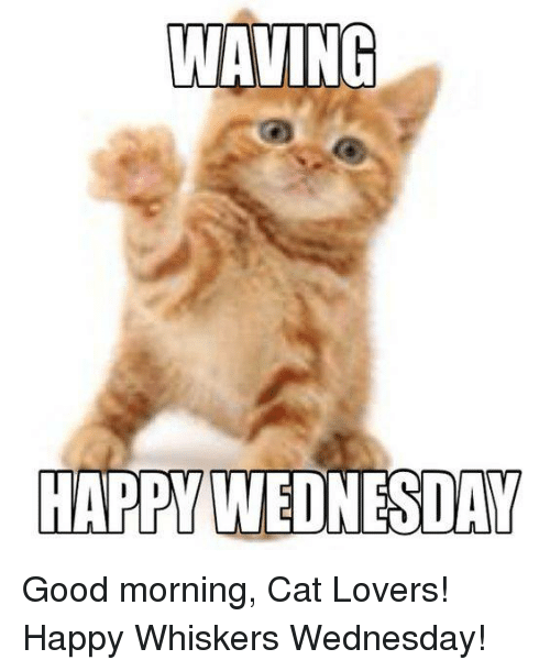 Good Morning Meme Wednesday : Waving happy wednesday good morning cat lovers