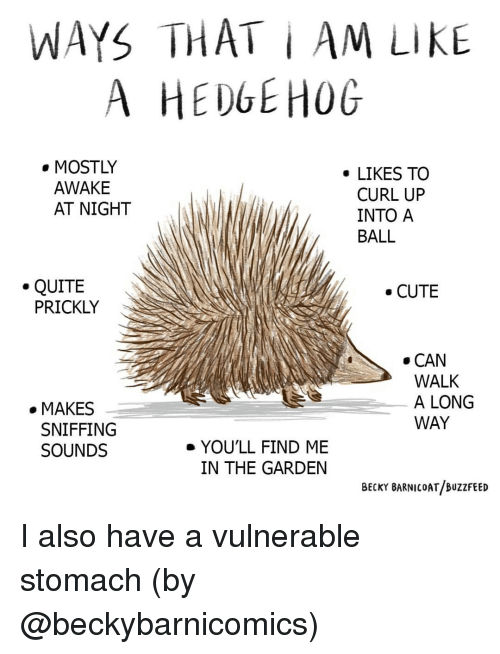 Cute, Memes, and Buzzfeed: WAYS THAT i AM LIKE  A HEDGEHOG  . MOSTLY  . LIKES TO  AWAKE  AT NIGHT  CURL UP  INTO A  BALL  .QUITE  CUTE  PRICKLY  . CAN  WALK  A LONG  WAY  . MAKES  SNIFFING  SOUNDS  e YOU'LL FIND ME  IN THE GARDEN  BECKY BARNICOAT/BUZzFEED I also have a vulnerable stomach (by @beckybarnicomics)
