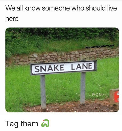 Funny, Live, and Snake: We all know someone who should live  here  MEMEMANMYLES  SNAKE LANE Tag them 🐍