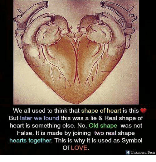 We All Used To Think That Shape Of Heart Is This But Later We Found