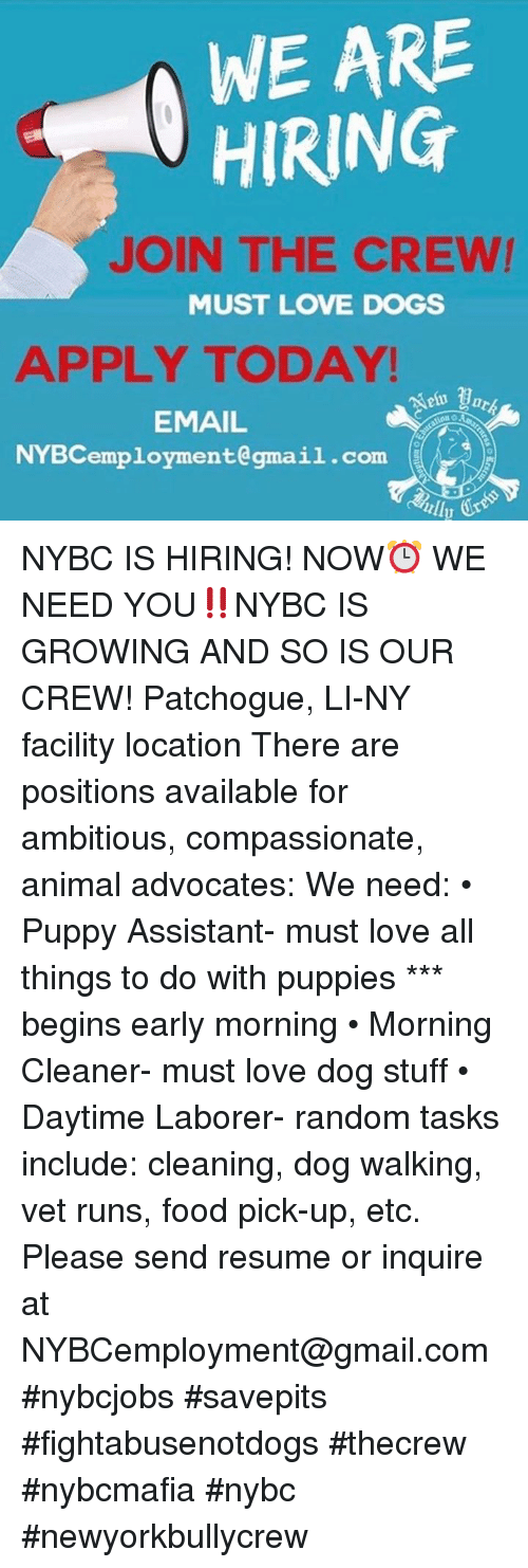 WE ARE HIRING JOIN THE CREW MUST LOVE DOGS APPLY TODAY EMAIL ...
