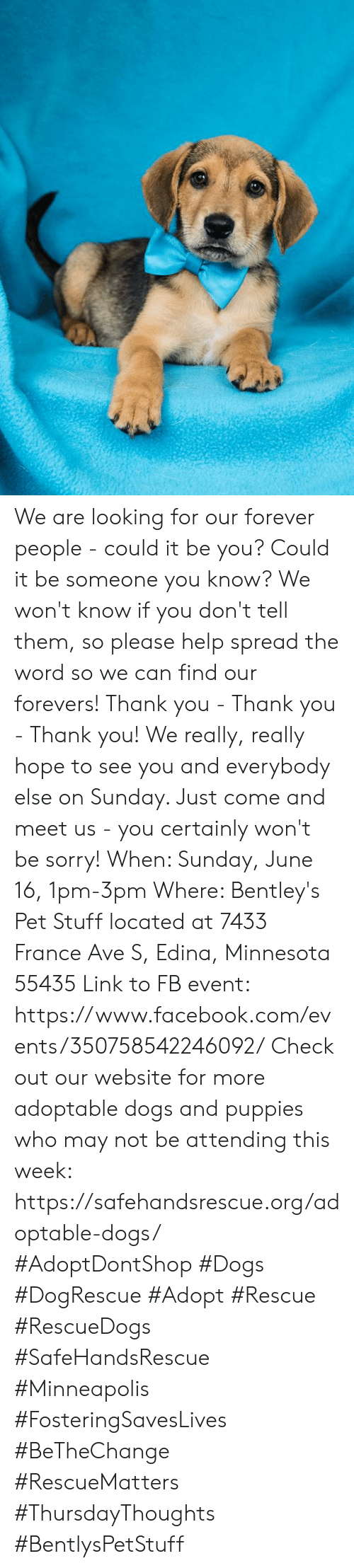 Dogs, Facebook, and Memes: We are looking for our forever people - could it be you? Could it be someone you know? We won't know if you don't tell them, so please help spread the word so we can find our forevers! Thank you - Thank you - Thank you! We really, really hope to see you and everybody else on Sunday. Just come and meet us - you certainly won't be sorry!  When: Sunday, June 16, 1pm-3pm  Where: Bentley's Pet Stuff located at 7433 France Ave S, Edina, Minnesota 55435 Link to FB event: https://www.facebook.com/events/350758542246092/  Check out our website for more adoptable dogs and puppies who may not be attending this week: https://safehandsrescue.org/adoptable-dogs/  #AdoptDontShop #Dogs #DogRescue #Adopt #Rescue #RescueDogs #SafeHandsRescue #Minneapolis #FosteringSavesLives #BeTheChange #RescueMatters #ThursdayThoughts #BentlysPetStuff