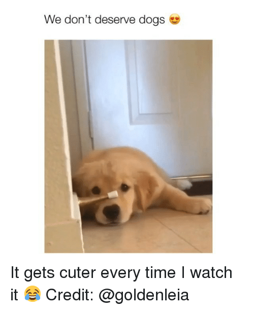 Dogs, Memes, and Time: We don't deserve dogs It gets cuter every time I watch it 😂 Credit: @goldenleia