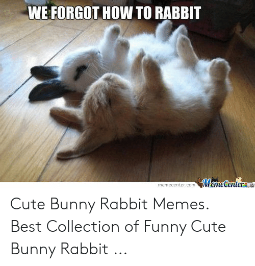 We Forgot How To Rabbit Emecenterlo Memecentercom Cute Bunny Rabbit