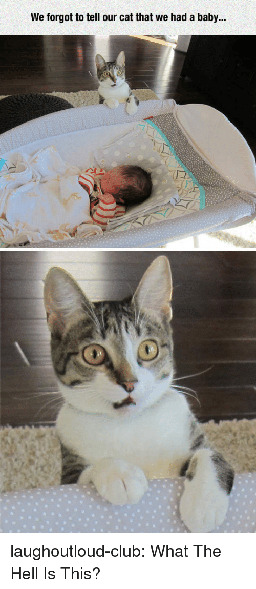 Club, Tumblr, and Blog: We forgot to tell our cat that we had a baby... laughoutloud-club:  What The Hell Is This?