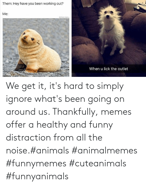 Animals, Funny, and Memes: We get it, it's hard to simply ignore what's been going on around us.  Thankfully, memes offer a healthy and funny distraction from all the noise.#animals #animalmemes #funnymemes #cuteanimals #funnyanimals