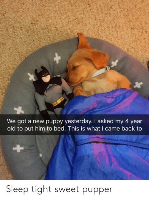 Puppy, Old, and I Came: We got a new puppy yesterday. I asked my 4 year  old to put him to bed. This is what I came back to Sleep tight sweet pupper