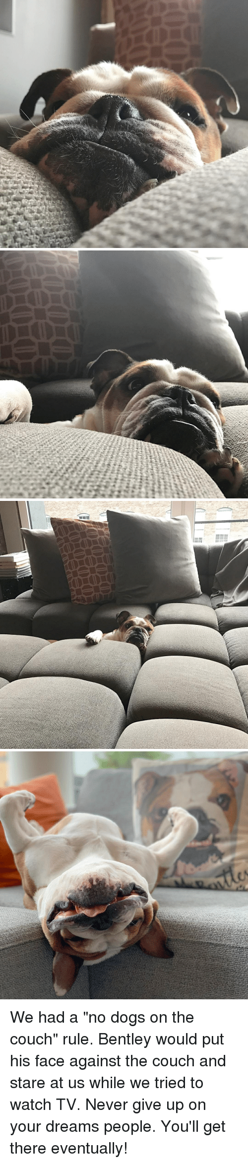 "Dogs, Bentley, and Couch: We had a ""no dogs on the couch"" rule. Bentley would put his face against the couch and stare at us while we tried to watch TV. Never give up on your dreams people. You'll get there eventually!"