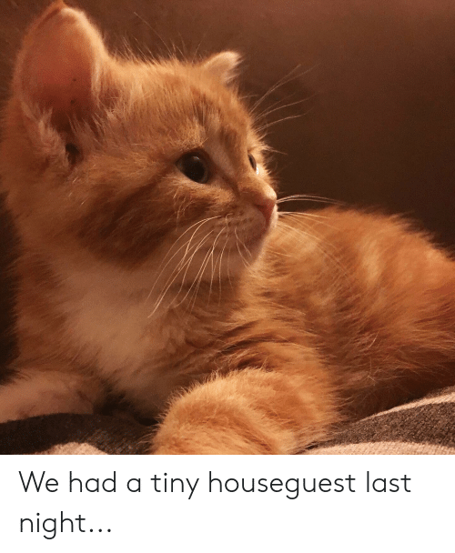 Tiny, Last Night, and  Night: We had a tiny houseguest last night...