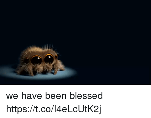 Blessed, Girl Memes, and Been: we have been blessed https://t.co/I4eLcUtK2j