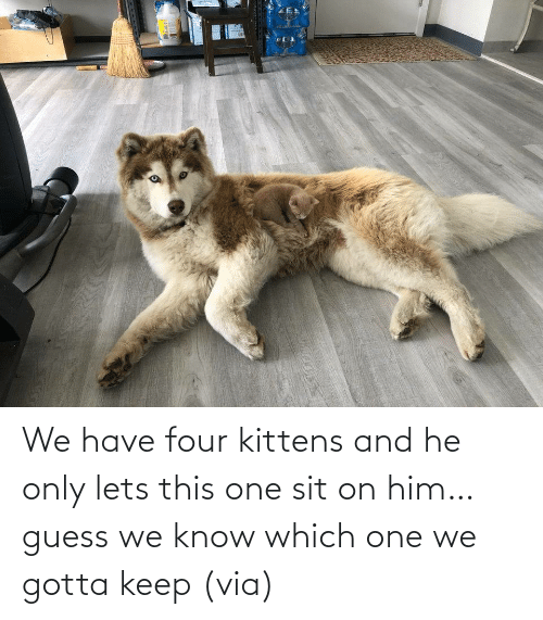 Aww, Reddit, and Target: We have four kittens and he only lets this one sit on him… guess we know which one we gotta keep(via)