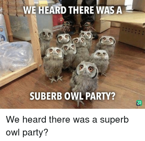 Party, Superb, and Owl: WE HEARD THERE WAS A  SUBERB OWL PARTY? We heard there was a superb owl party?