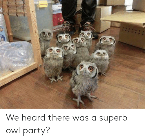 Party, Superb, and Owl: We heard there was a superb owl party?
