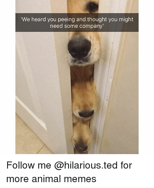 Funny, Memes, and Ted: We heard you peeing and thought you might  need some company Follow me @hilarious.ted for more animal memes