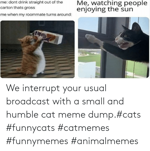 Cats, Meme, and Humble: We interrupt your usual broadcast with a small and humble cat meme dump.#cats #funnycats #catmemes #funnymemes #animalmemes