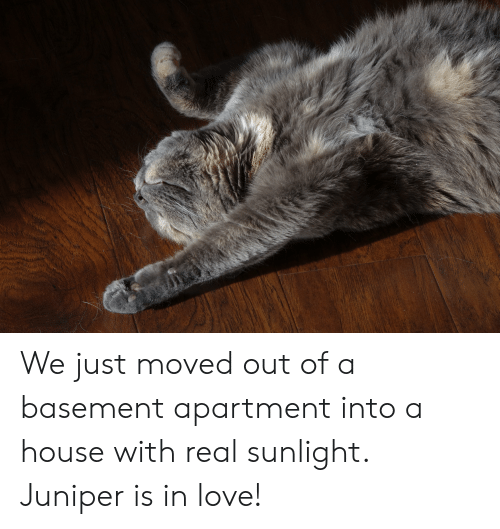 Love, House, and Juniper: We just moved out of a basement apartment into a house with real sunlight. Juniper is in love!