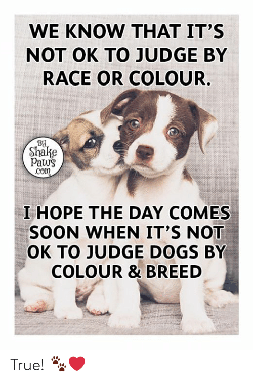 Dogs, Memes, and Soon...: WE KNOW THAT IT'S  NOT OK TO JUDGE BY  RACE OR COLOUR.  BY  Shalke  Paws  Com  I HOPE THE DAY COMES  SOON WHEN IT'S NOT  OK TO JUDGE DOGS BY  COLOUR & BREED True! 🐾❤️