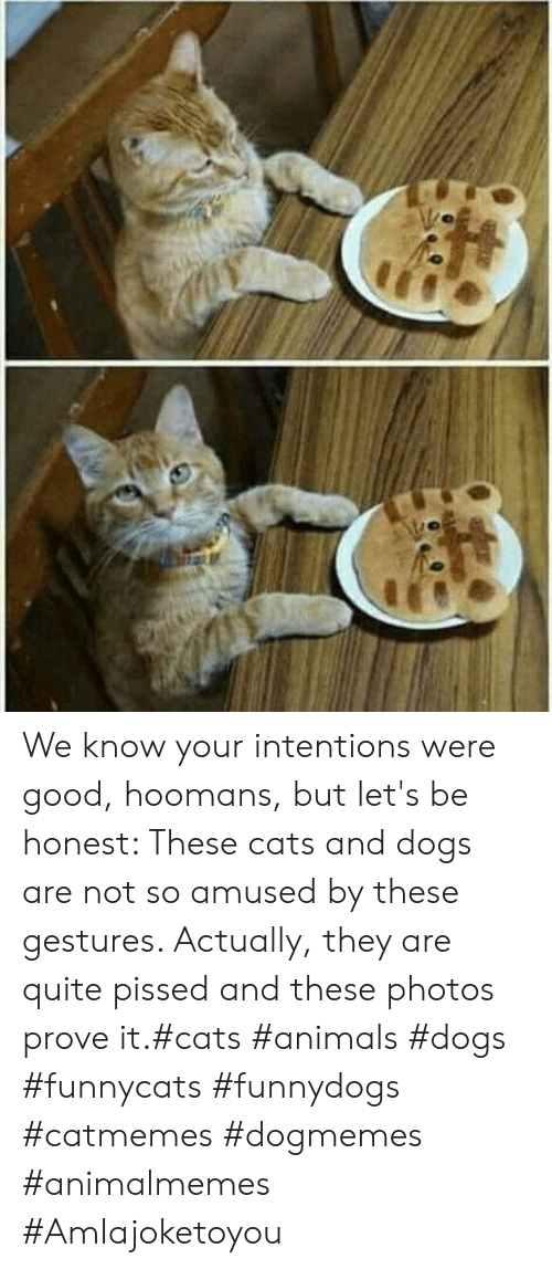 Animals, Cats, and Dogs: We know your intentions were good, hoomans, but let's be honest: These cats and dogs are not so amused by these gestures. Actually, they are quite pissed and these photos prove it.#cats #animals #dogs #funnycats #funnydogs #catmemes #dogmemes #animalmemes #AmIajoketoyou